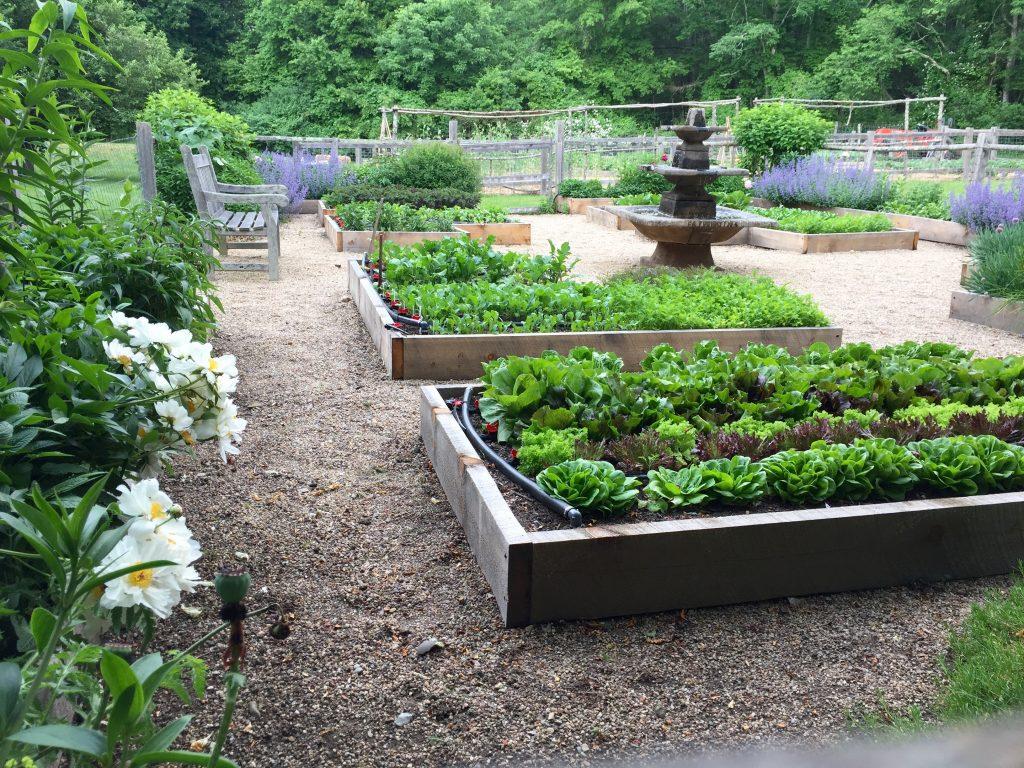 Just Right Farm Plympton MA  kallista vegetable garden