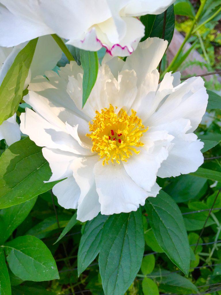 Just Right Farm Plympton MA  kallista flower garden